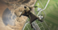 EA confirma que Battlefield 2042 usará bots para ajudar a preencher seus servidores de 128 jogadores